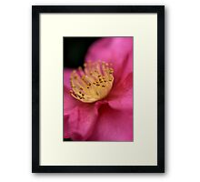 Camellia Sasanqua Framed Print