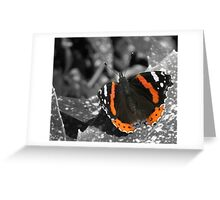 The Red Admiral Greeting Card