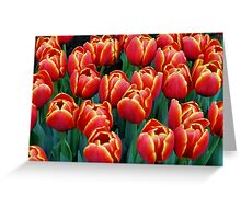 Vibrant Tulips Greeting Card