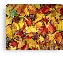 Nature's carpet, fall for Autumn Canvas Print