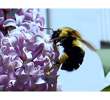 To bee or not Photographic Print