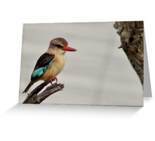 African brown-hooded kingfisher Greeting Card