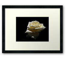 Rose  White Color. Framed Print