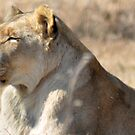 Lioness by loz788