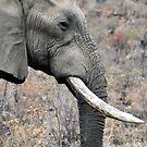 Bull elephant portrait by loz788