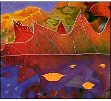 Oak Leaf Dreams of a Colorful World Photographic Print