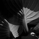 Hosta Leaves in Morning Sunlight by Valarie Napawanetz