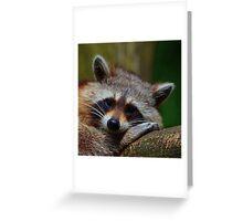 Raccoon Face Greeting Card