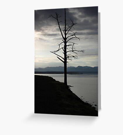 Tree on Yellowstone Lake Greeting Card