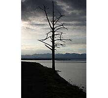 Tree on Yellowstone Lake Photographic Print