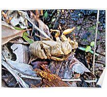 Cicada shell - Jesmond bushland Poster