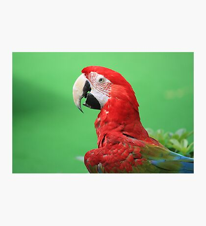 Majestic Macaw Photographic Print