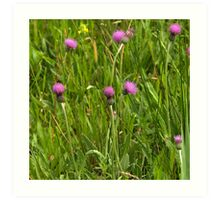 Grassland with Meadow Thistle Art Print