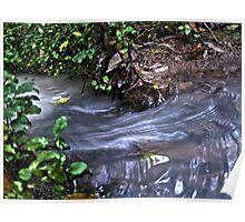 Water stream - Jesmond Bushland Poster