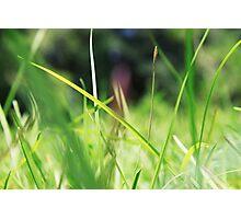 Macro Lawn Photographic Print