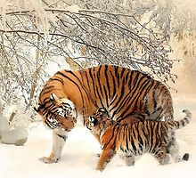 Siberian Tiger and Cub by Edmond  Hogge