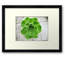 Green Wonder Framed Print