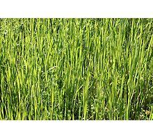 Green grass on a summer field Photographic Print