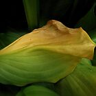Hosta (view larger) by selca6