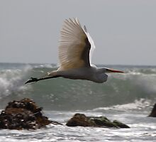 White in Flight Two by tom j deters