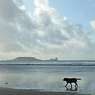 Storm the Dog with Worm&#x27;s Head, Rhosilli by k84ddesigns