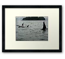 ~ Northern Resident Orcas ~ Framed Print