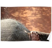 Elephant Ride Poster