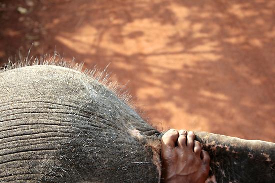 Elephant Ride by Victoria Kidgell