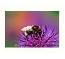 Busy Bee working hard on a wild flower in the Meadow  Art Print
