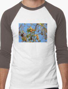 Plane tree in the sunlight, Rhodopi Mountains in Southern Bulgaria Men's Baseball ¾ T-Shirt