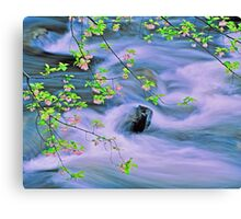 SPRING,MIDDLE PRONG LITTLE RIVER,TREMONT Canvas Print