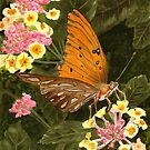 Butterfly on Flower by Anne Sainz