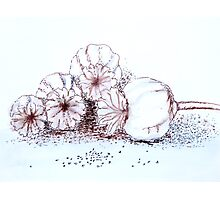 Giant poppy seed pods Photographic Print