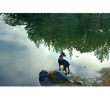 Tarn and the Topsy Turvy Trees Photographic Print