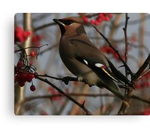 The Waxwing Canvas Print