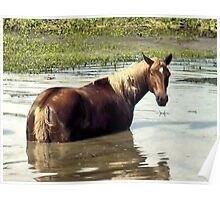 """""""Horses with Attitude, No. 2, """"What You Lookin' At?'""""... prints and products Poster"""