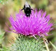 Bee On Flower 0048 by mike1242
