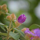 Flower by Jagadeesh Sampath