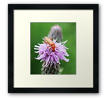 Insect on flower 0002 Framed Print