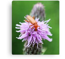 Insect on flower 0002 Canvas Print