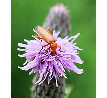 Insect on flower 0002 Photographic Print