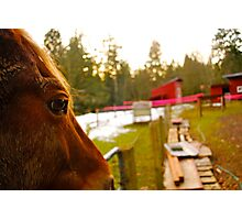 Cowboy - A Real Partner Photographic Print