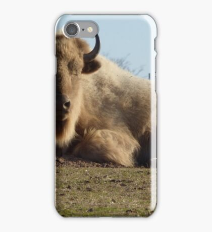 Buffalo of the hill. iPhone Case/Skin