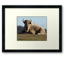 Buffalo of the hill. Framed Print