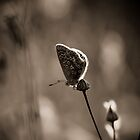 butterfly by fotozo