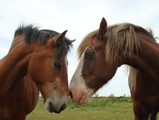 Love thy  NEIGH....bour by AngelicaL