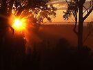 """""""SunBurst"""" by debsphotos"""