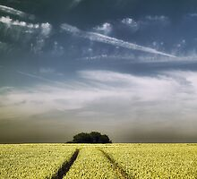 Follow the Lines  by Donna-R