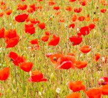 Poppies, poppies, poppies Sticker
