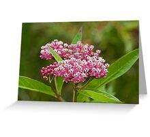 Swamp Milkweed (Asclepias incarnata) Greeting Card